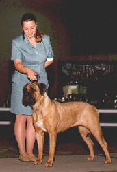 Sara Gregware, PHA, AKC Registered, Breed Handling